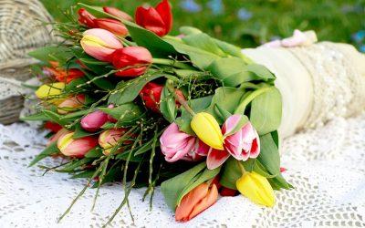 Tulpen, Frühling in der Blumenvase