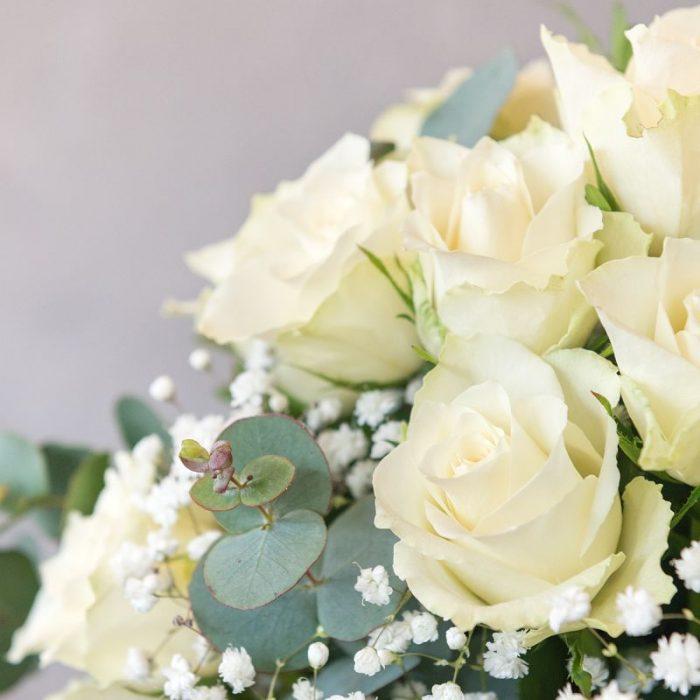 Vivien, weiße Rosen, Rosenversand in Deutschland