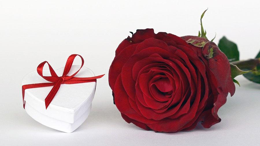 Königin der Blumen: die Rose